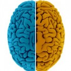, Left Brain vs. Right Brain